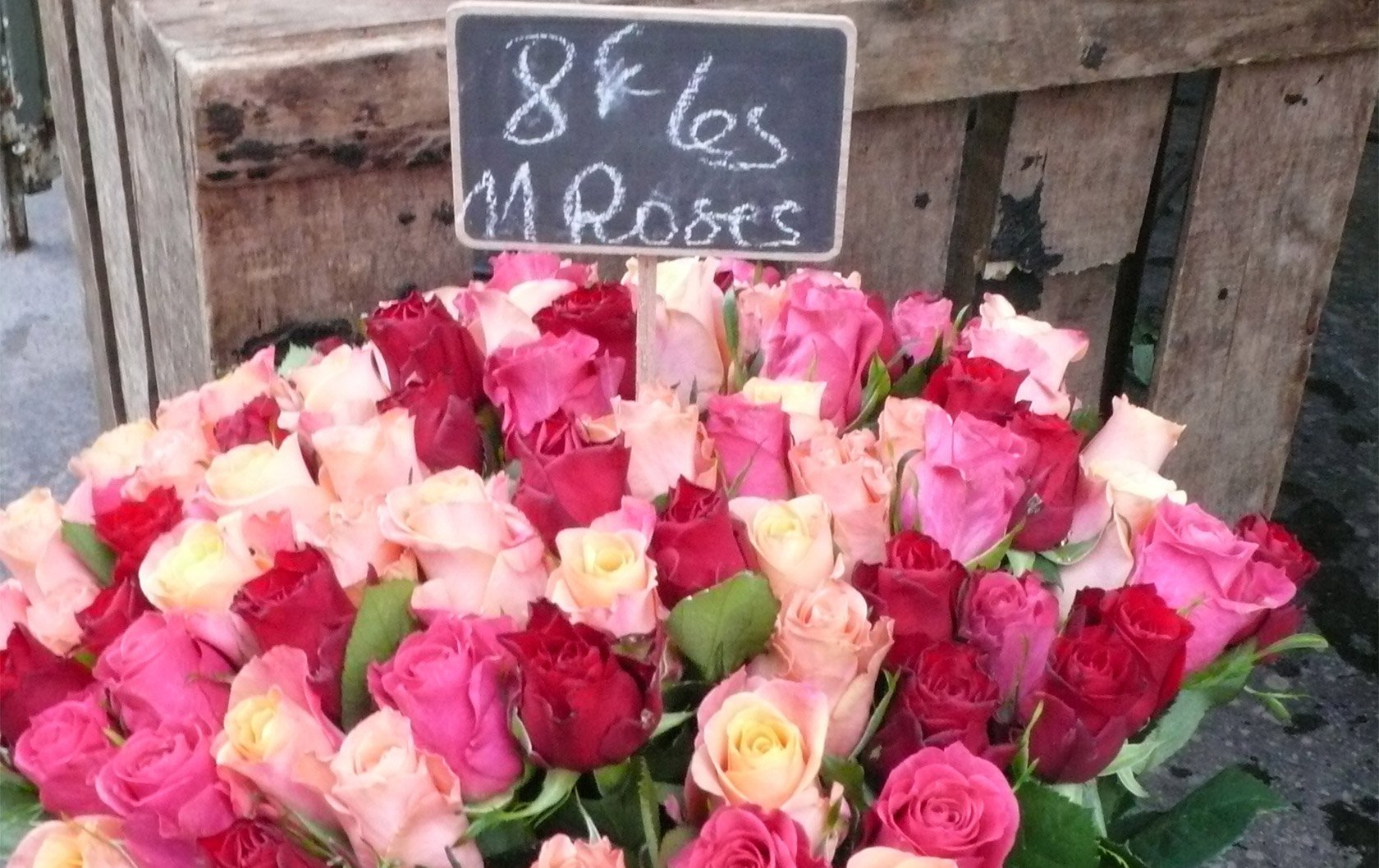flowers-pink-bucket