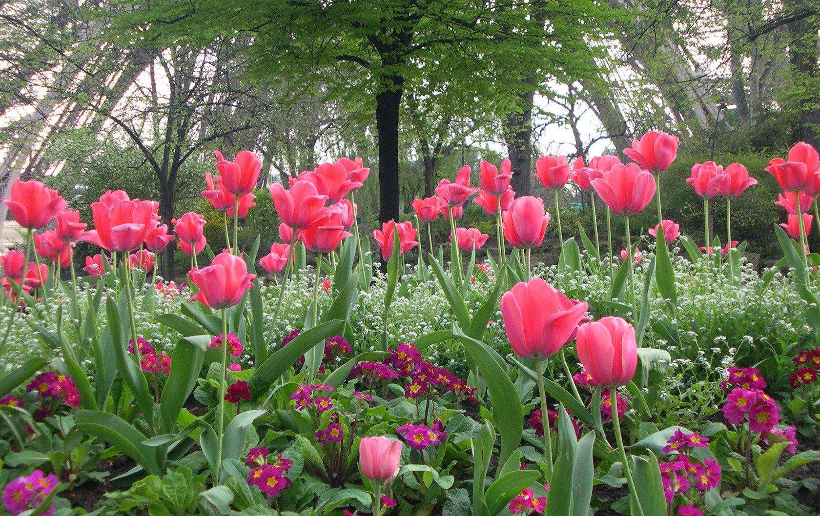 spring-blooms-in-paris-perfect