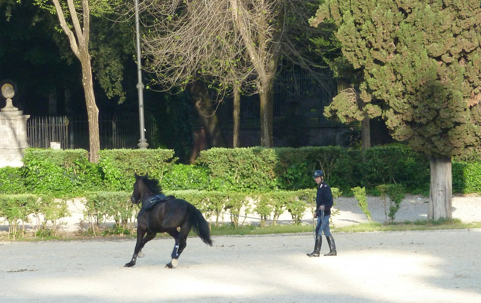 italy-police-horse