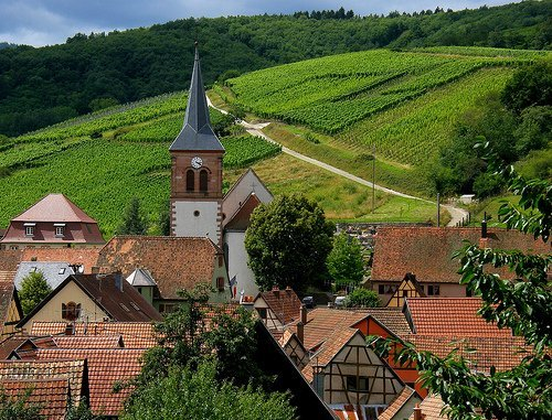 French Wine Alsace Village and Vineyard