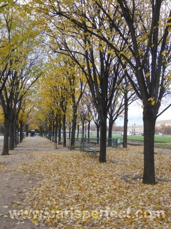 Autumn Leaves in Paris