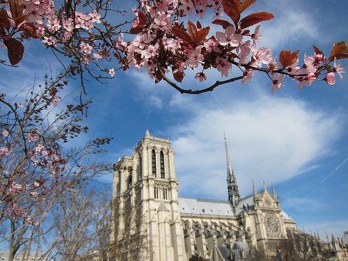 Notre Dame Paris Spring Blossoms