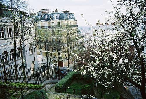 Spring Blossoms Montmartre Paris