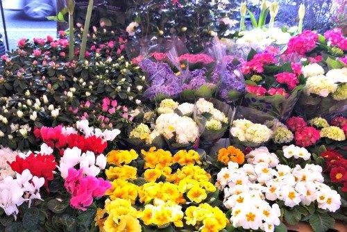 President Wilson Market Paris Flower Display