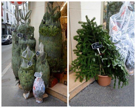 Christmas in Paris 7th Arrondissement Trees