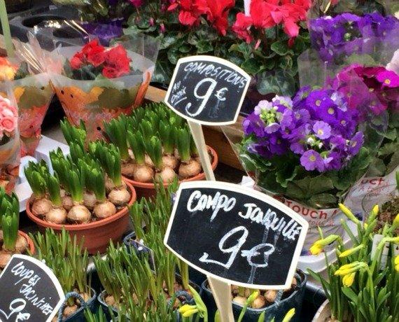 Welcoming Spring in Paris