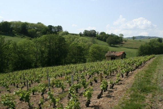 French wines, Beaujolais, france countryside,