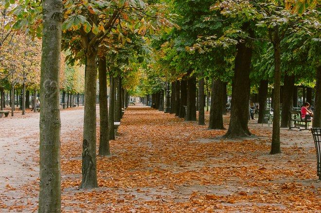 Autumn Colors in Paris