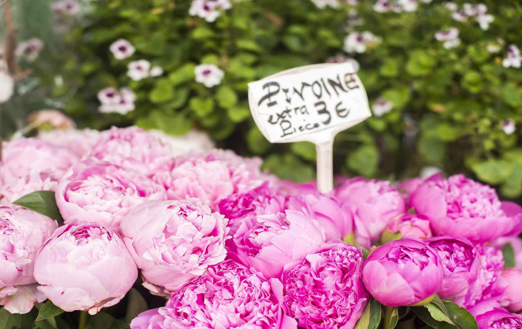 Paris florists peonies