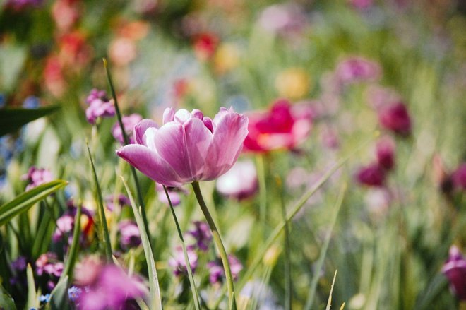 Springtime at Giverny