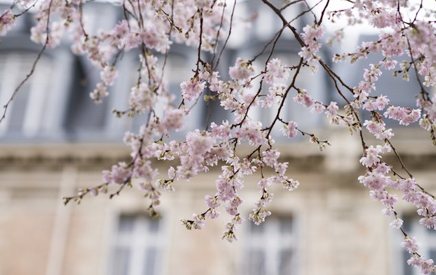 Romantic Things to See and Do in Paris for Valentine's Day