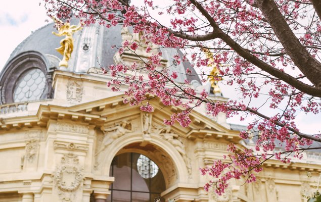 Pink blossoms in the Petit Palais courtyard - Image by Hannah Wilson