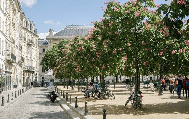 Place Dauphine Spring Blossoms