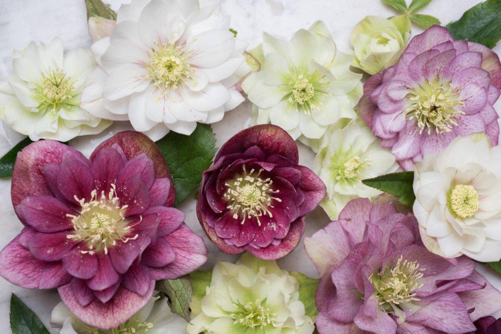 Mid-Winter Flowers to Buy in Paris   Georgianna Lane for Paris Perfect
