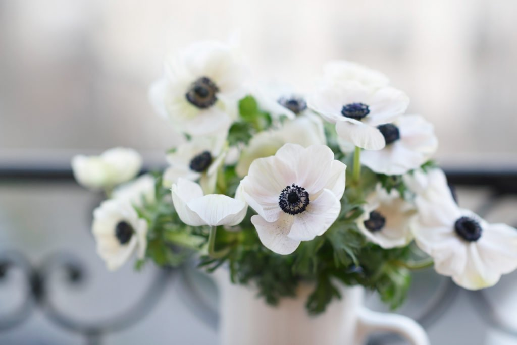 6 gorgeous mid winter flowers to buy in paris paris perfect mid winter flowers to buy in paris georgianna lane for paris perfect mightylinksfo