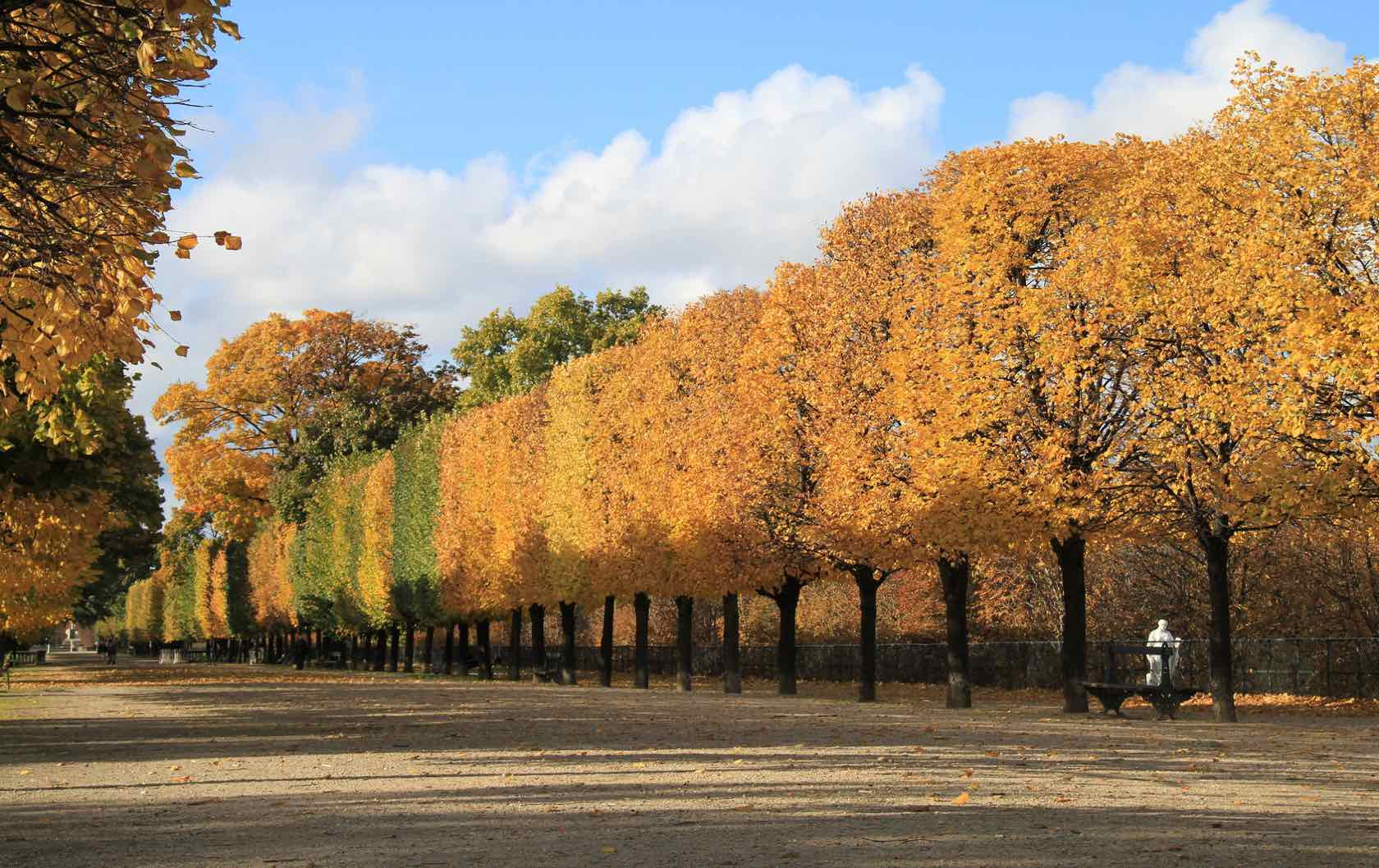 5 Places to see Fall Foliage in Paris by Paris Perfect Tuileries Gardens