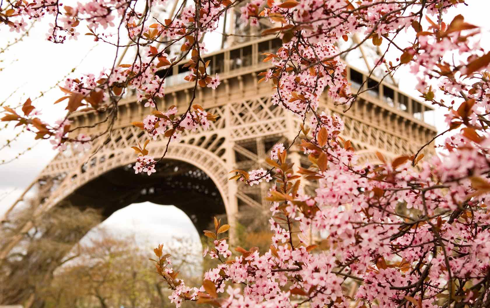 Where to See Spring Flowers in Paris by Paris Perfect Eiffel Tower Spring