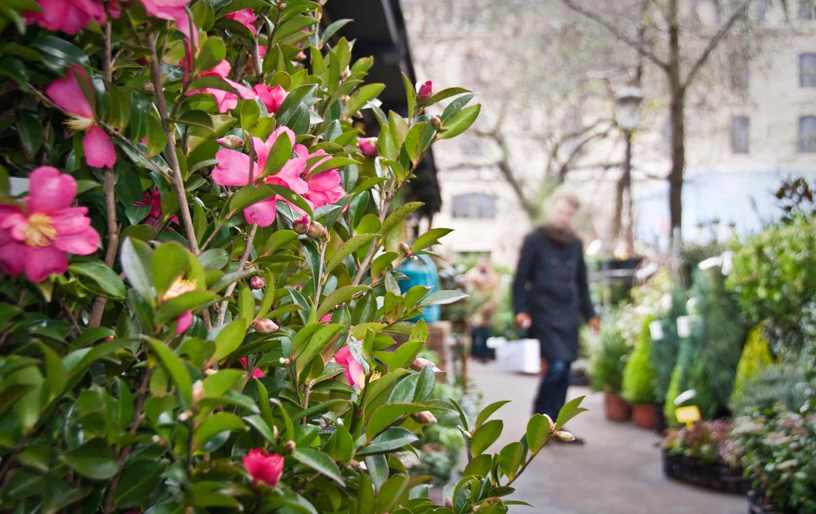 Where to See Spring Flowers in Paris by Paris Perfect flower shop