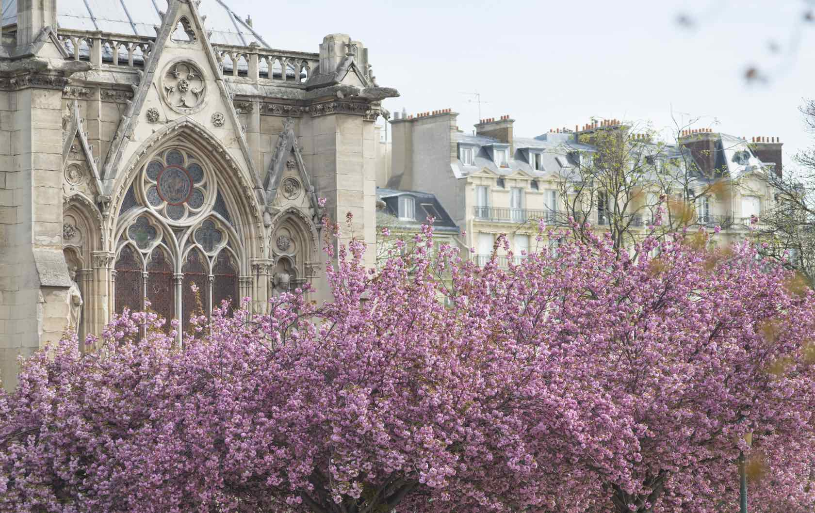 Where to See Spring Flowers in Paris by Paris Perfect Notre Dame Flowering Trees