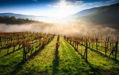Wine Tours in Tuscany: 4 Itinerary Ideas