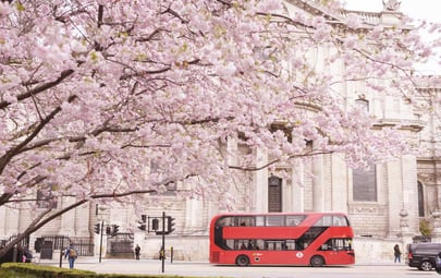 Where to See the Earliest Spring Blooms in London