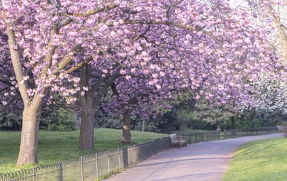 Don't Miss the Spring Blooms in Kensington and Chelsea
