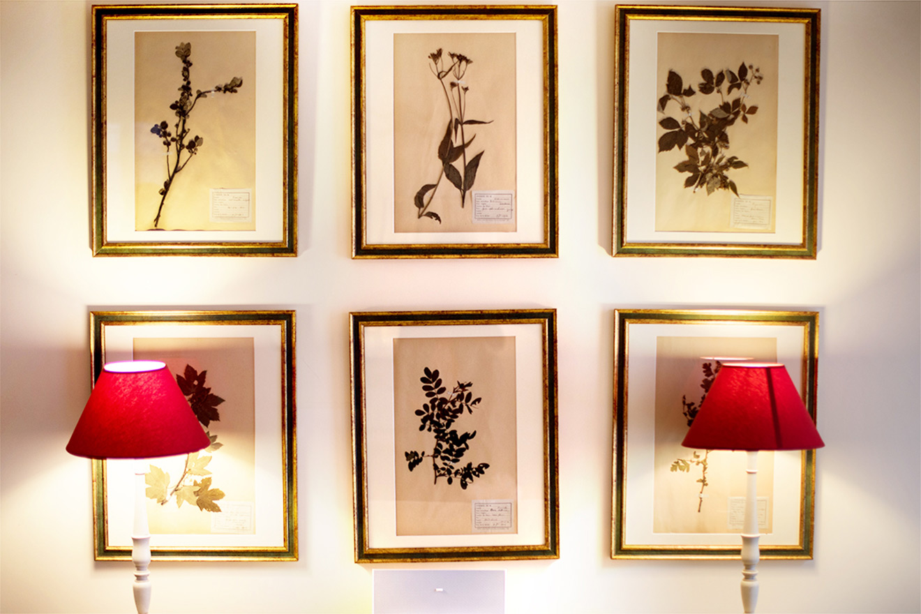 Botanical themed pictures in the Rully vacation rental offered by Paris Perfect
