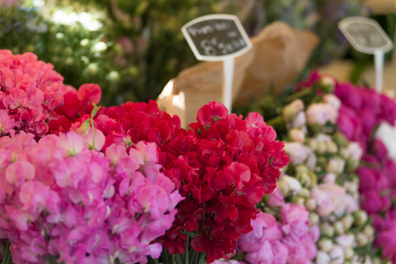 Fresh flowers - rue Cler market