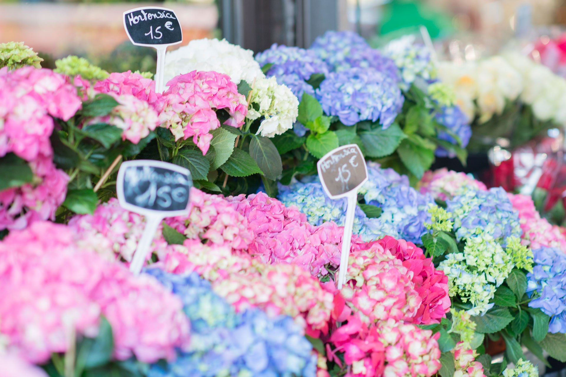 Brighten your day with some fresh flowers from the local market - Paris Perfect