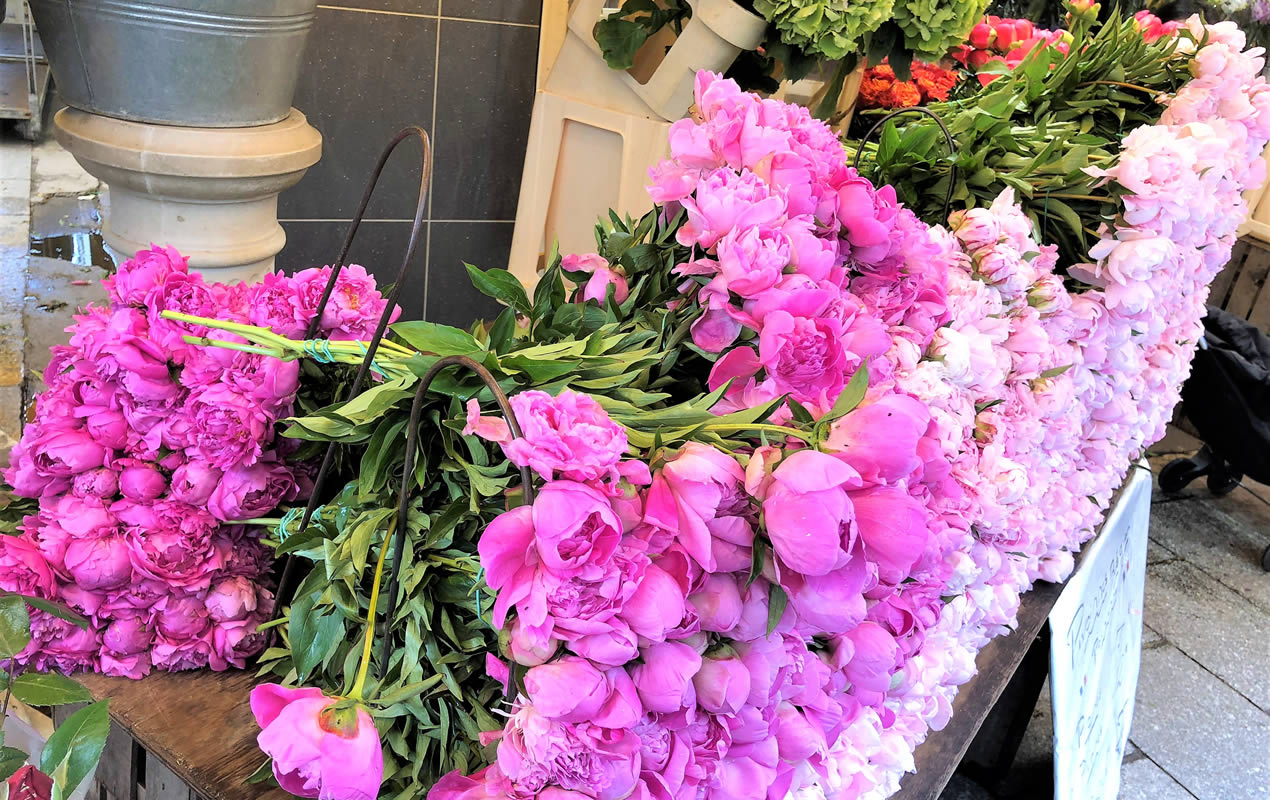 Pink peonies from rue Cler